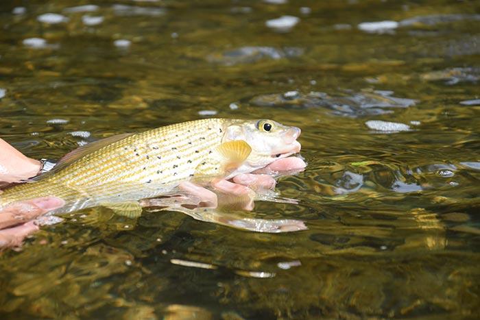 Attention ! Réglementation spécifique exceptionnelle sur les bassins de la Loue, du Dessoubre et du Cusancin