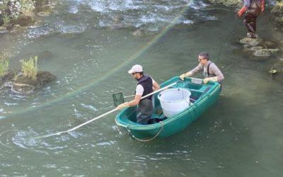 2 Pêches de sauvetage réalisées dans le Dessoubre le 1er et 9 septembre.